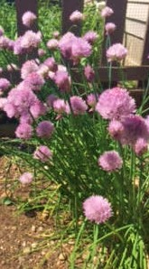 freshchives